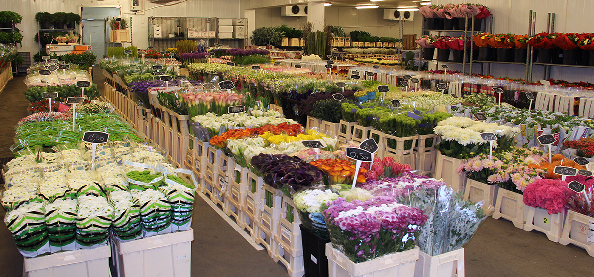 showroom-fleurs-coupee-grossiste-daviflor